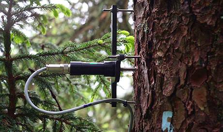 Le dendromètre à pointe permet de mesurer les fluctuations du rayon du tronc avec une précision de l'ordre du micromètre. Les données renseignent sur la croissance et le bilan hydrique des arbres. (Photo : Roman Zweifel)