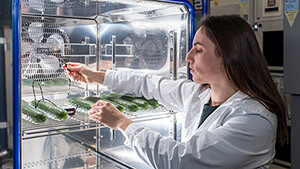 Researching for quality in the supermarket: Empa researcher Seraina Schudel measures the temperatures inside a cucumber. Image: Empa